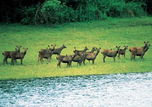 Idukki_wildlife