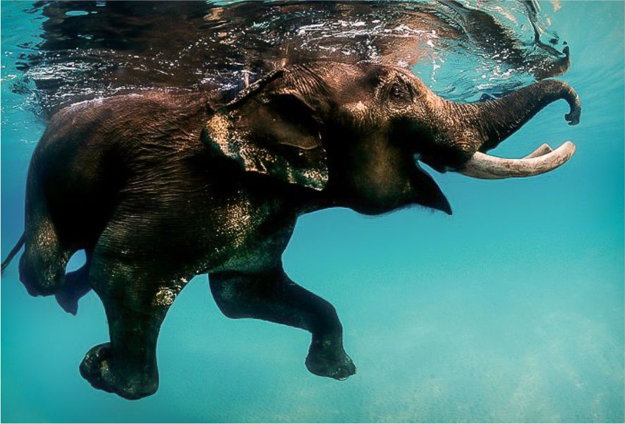 elephantbeachandaman