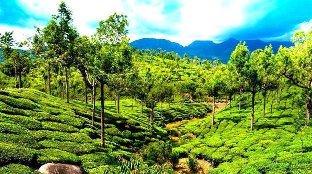 The Best Hotels in Munnar